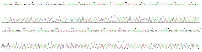 虫の遺伝子塩基配列シート