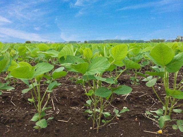 生鮮野菜の衛生管理 とは。生産から流通販売までを網羅。
